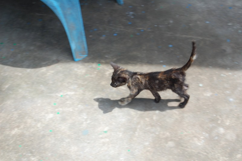 Donut: the little kitten who left a big impression  (6/6)