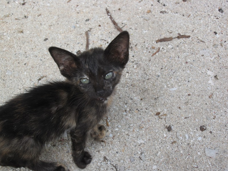 Donut: the little kitten who left a big impression  (1/6)