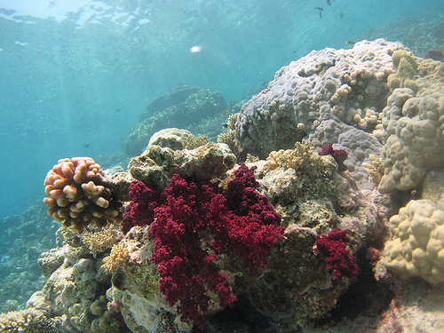 Reef-Safe Sunscreen - why it's hard being a responsible diver