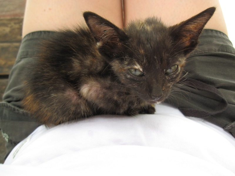 Donut: the little kitten who left a big impression  (5/6)