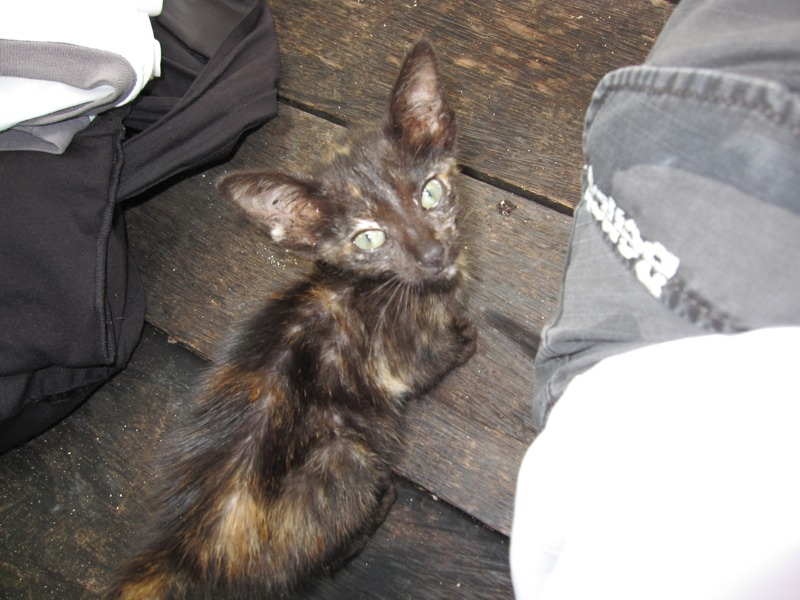 Donut: the little kitten who left a big impression  (4/6)