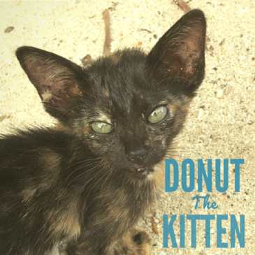 Donut the kitten, Pulah Weh, Indonesia