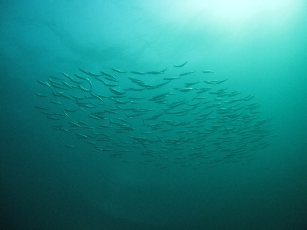 10 things you should know before you dive the Sardine Run (1/5)