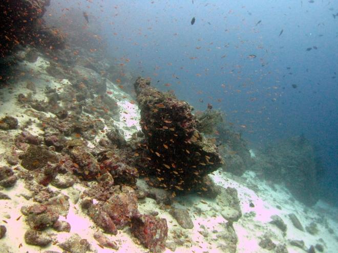 Selaco Caves reef