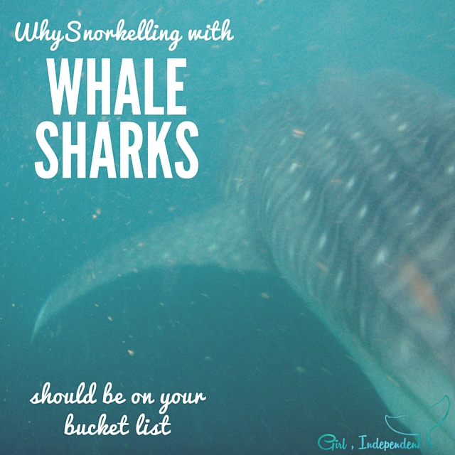 Snorkelling with Whalesharks