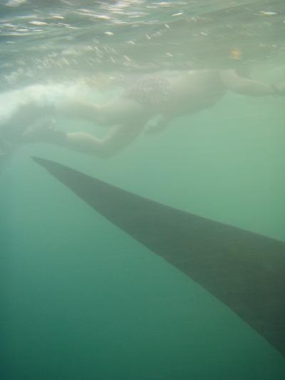 Whaleshark tail